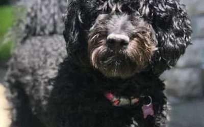 Rosie's Second Litter